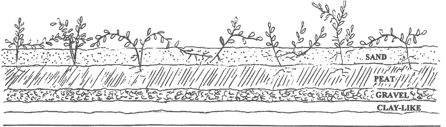 cross_section-2.png
